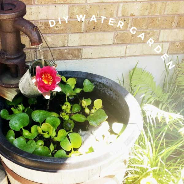 Water garden in a rain barrel.