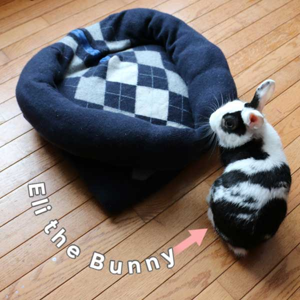 Make A Sweater Pet Bed For Dogs Cats