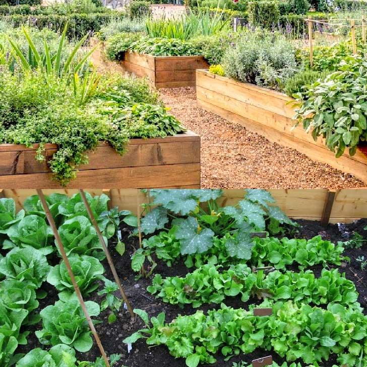 Wooden raised garden beds.