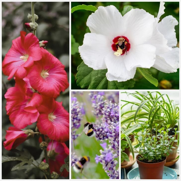 Flowering plants and herbs in the garden.