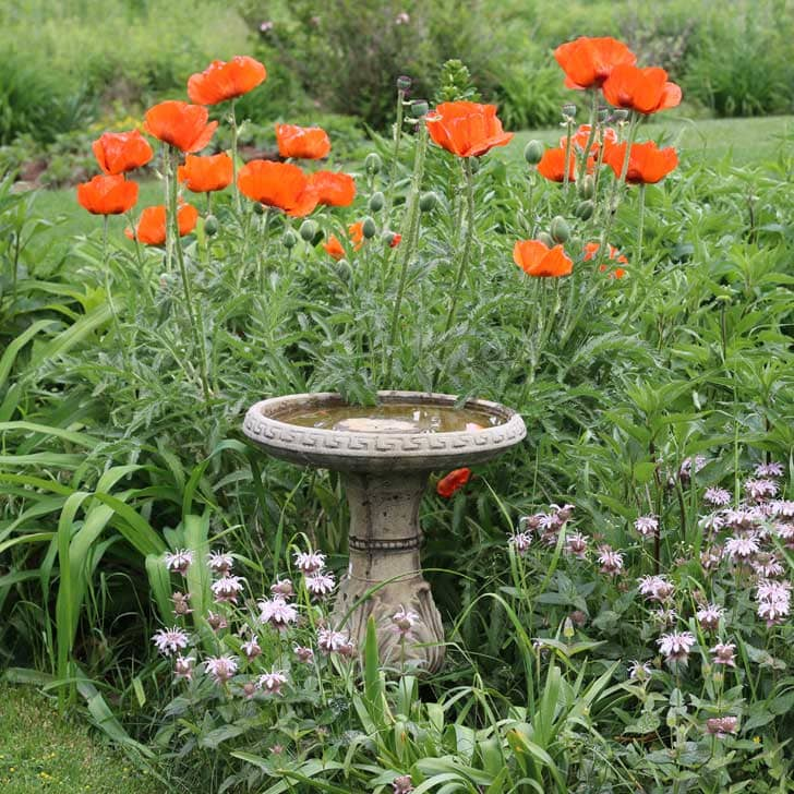 Bird bath, poppies, and other flowers in the garden.