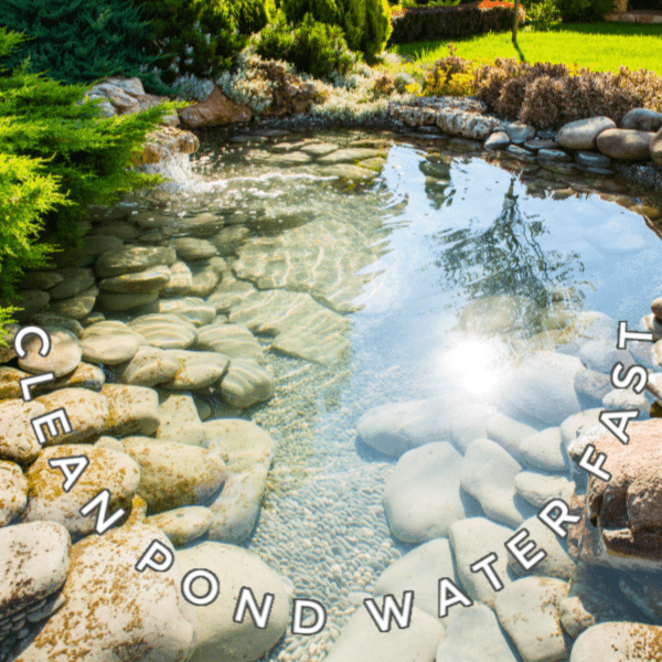 How To Clean Gross Murky Pond Water Fast Without Chemicals