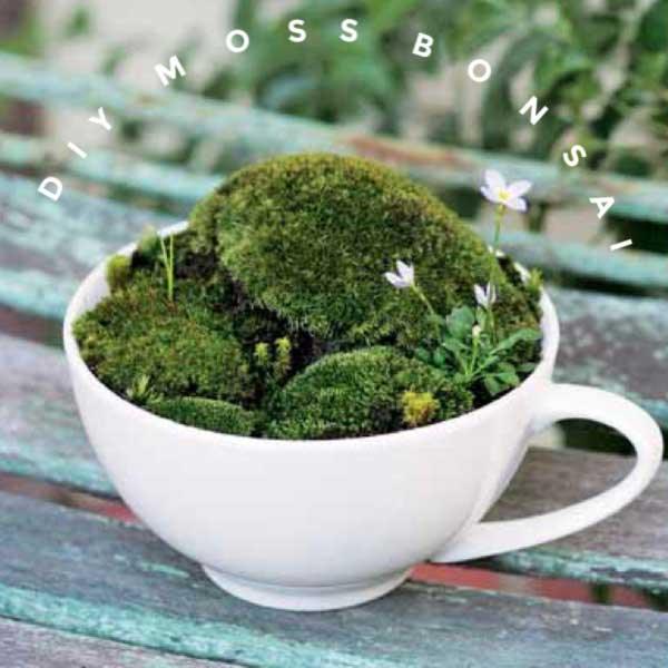 Moss in a teacup.