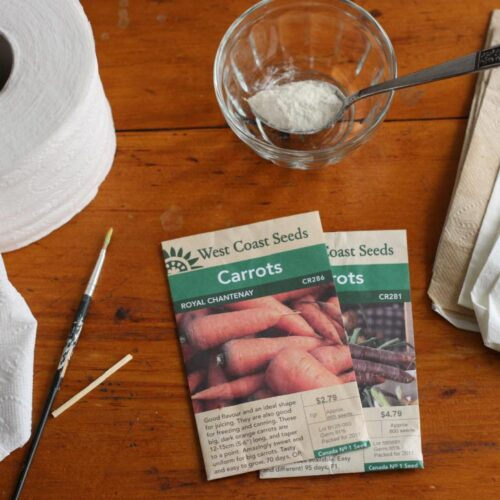 Carrot seed packets, homemade flour glue, paint brushes, and napkins.