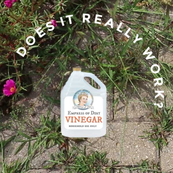 Does Vinegar Really Kill Weeds Empress Of Dirt
