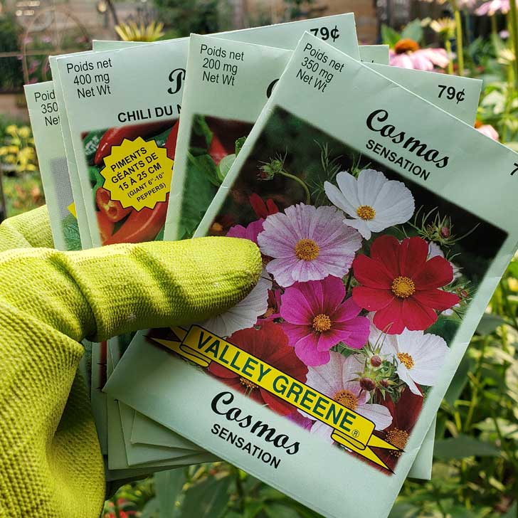 Seed packets from the Dollar Store.