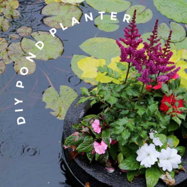 Floating pond planter.