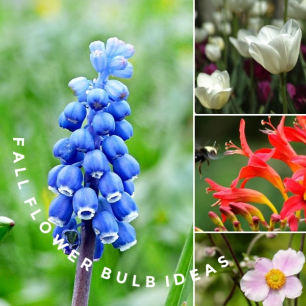 20 Breathtaking Flowering Bulbs To Plant In Fall