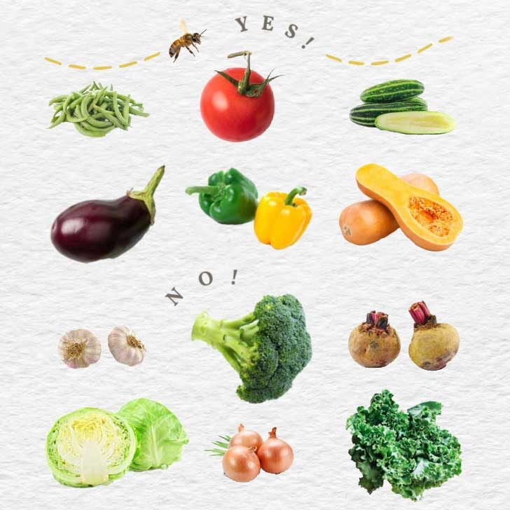 Examples of garden fruits and vegetables including beans, tomato, cucumber, and broccoli.
