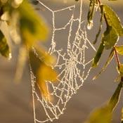 Frosty spider web in garden.