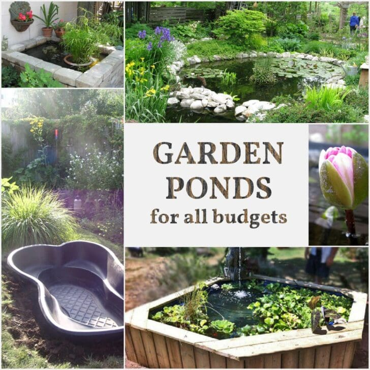 Garden ponds of various sizes and designs.