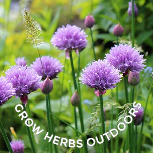How Grow Herbs Indoors Beginner Guide Empress Dirt