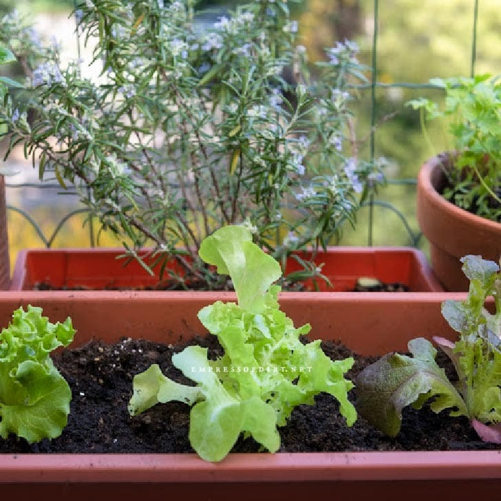 Vegetable garden with containers.