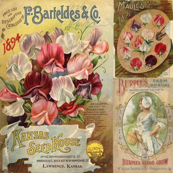 History of seed catalogs including this one featuring flowering bulbs.