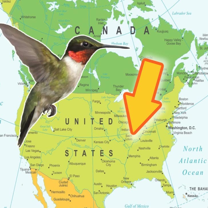 Hummingbird and map of North America.