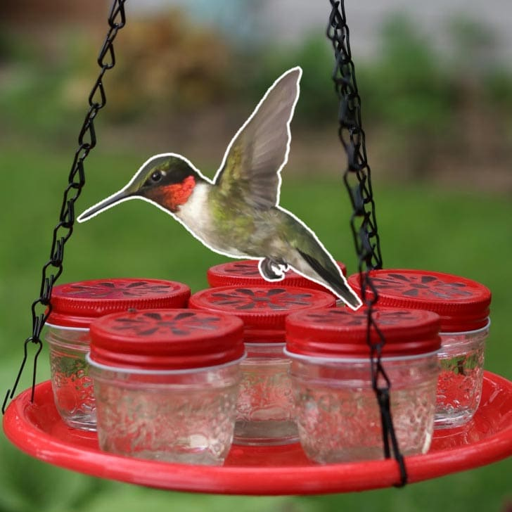 Hummingbird flying to feeder made from small mason jars with red tops.