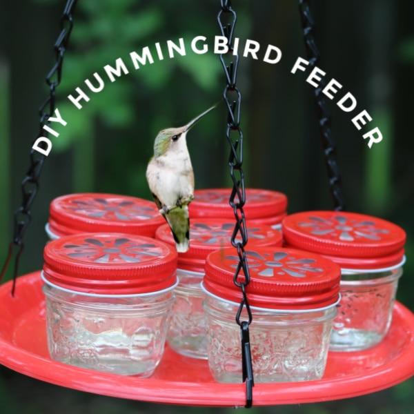 Mason jar hummingbird feeder.