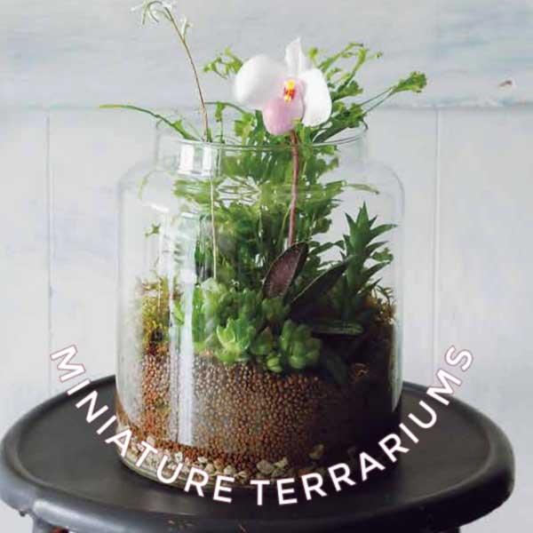 Miniature terrarium in jar.