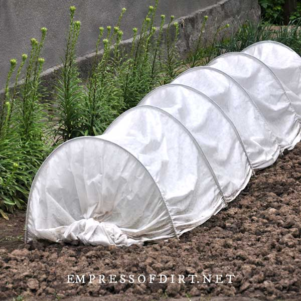Polytunnel in garden used to protect vegetables.