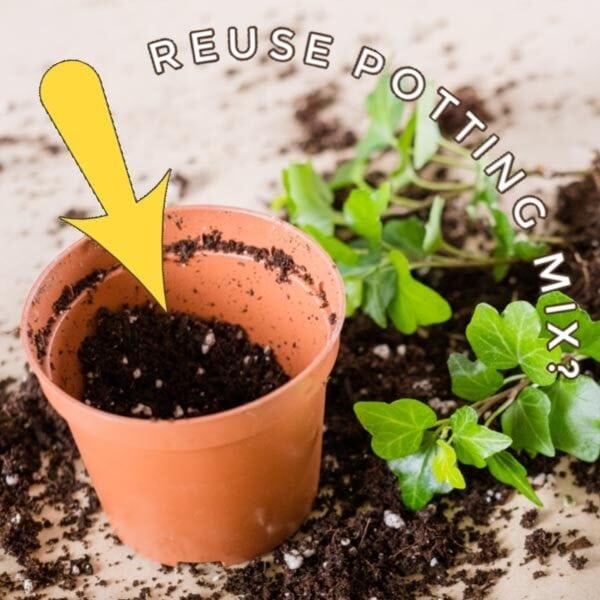 Spilled potting mix, plant, and garden pot.