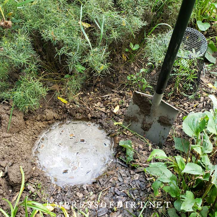 Water-filled hole in garden bed used for testing soil drainage.