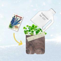 Sowing seeds in a milk jug in winter.