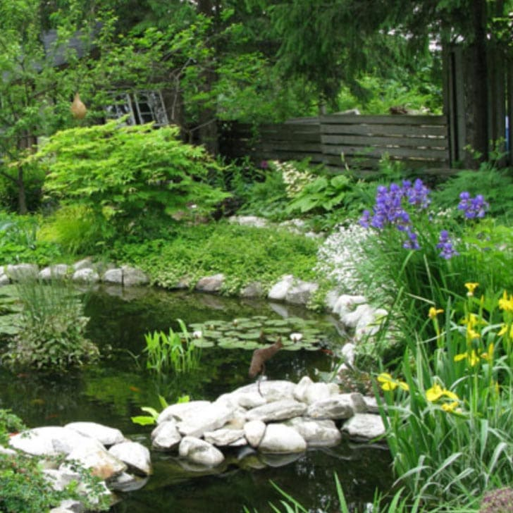 Beautiful in-ground backyard garden pond with plants.