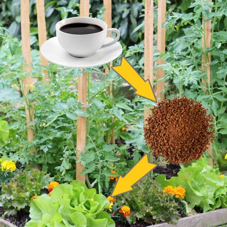 Coffee grounds and a vegetable garden.