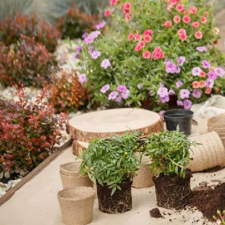 Garden plants in pots and flowering annuals.