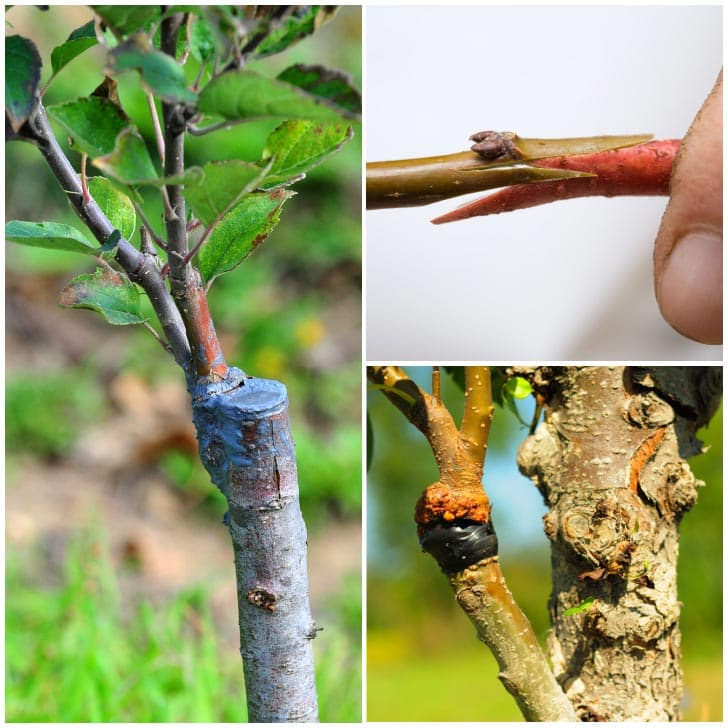 Examples of plant grafting methods.