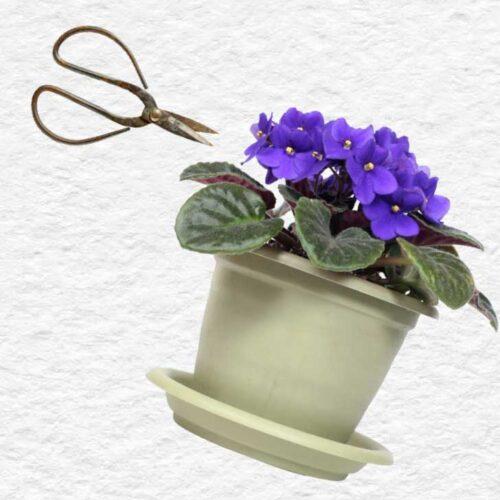 https://empressofdirt.net/grow-african-violets-leaf-cuttings/
