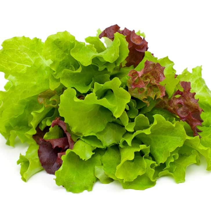 Red and green leaf lettuces.