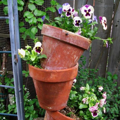 Clay tipsy pots with pansies in the garden.