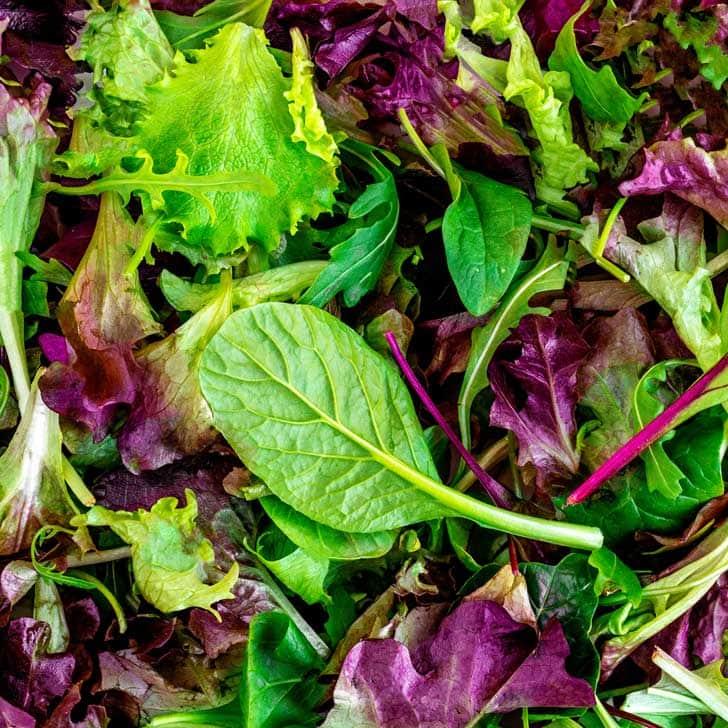 Mesclun mix leafy greens.