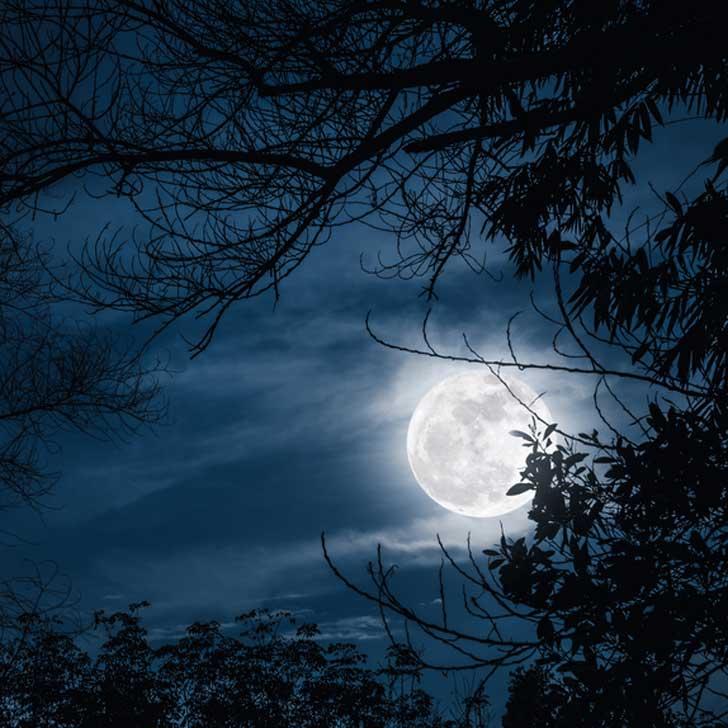 Moon over garden.
