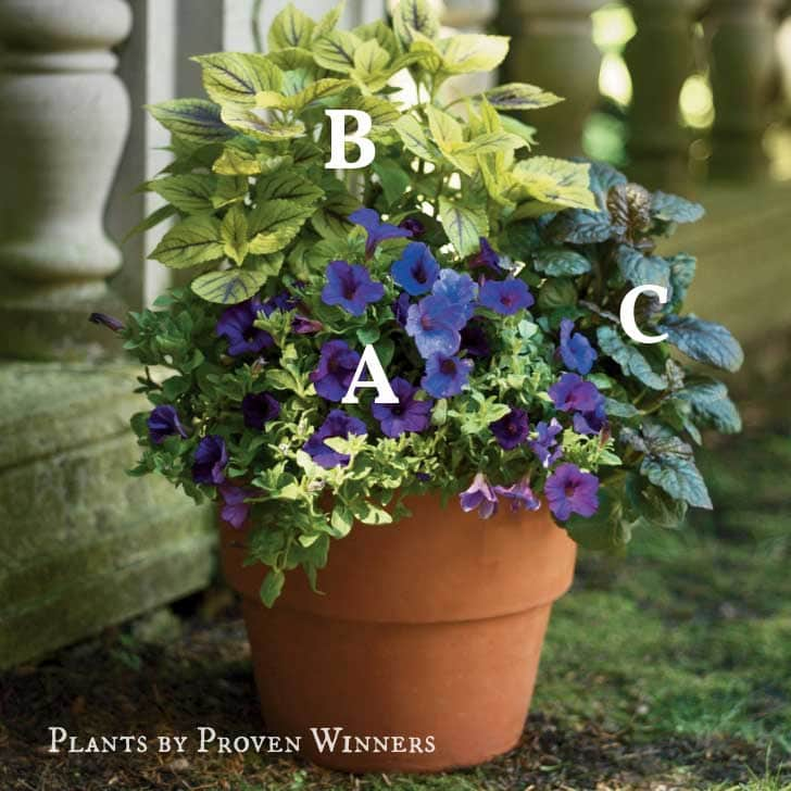 Colorful planter of flowers by Proven Winners.
