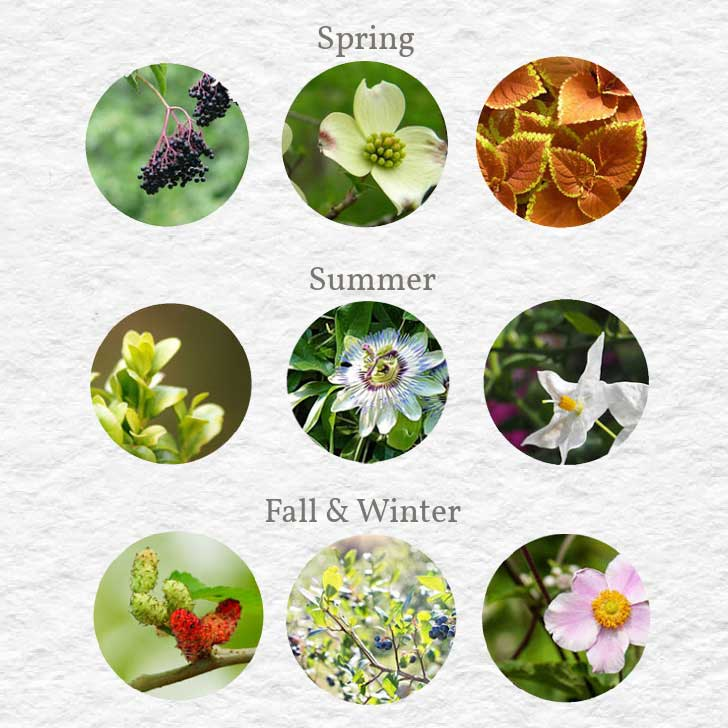 Examples of plants you can grow from cuttings in spring, summer, and fall.