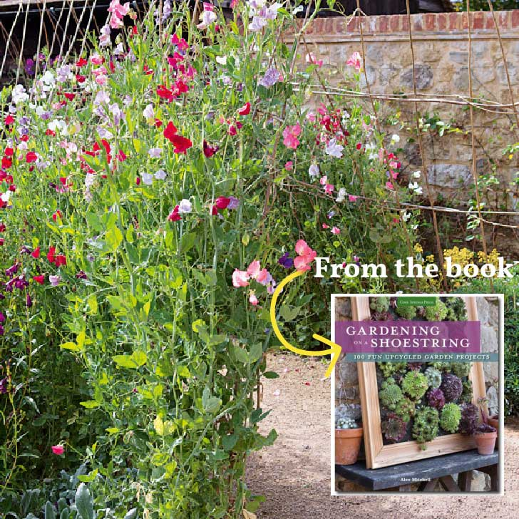 Sweet pea garden arch from the book, Gardening on a Shoestring.