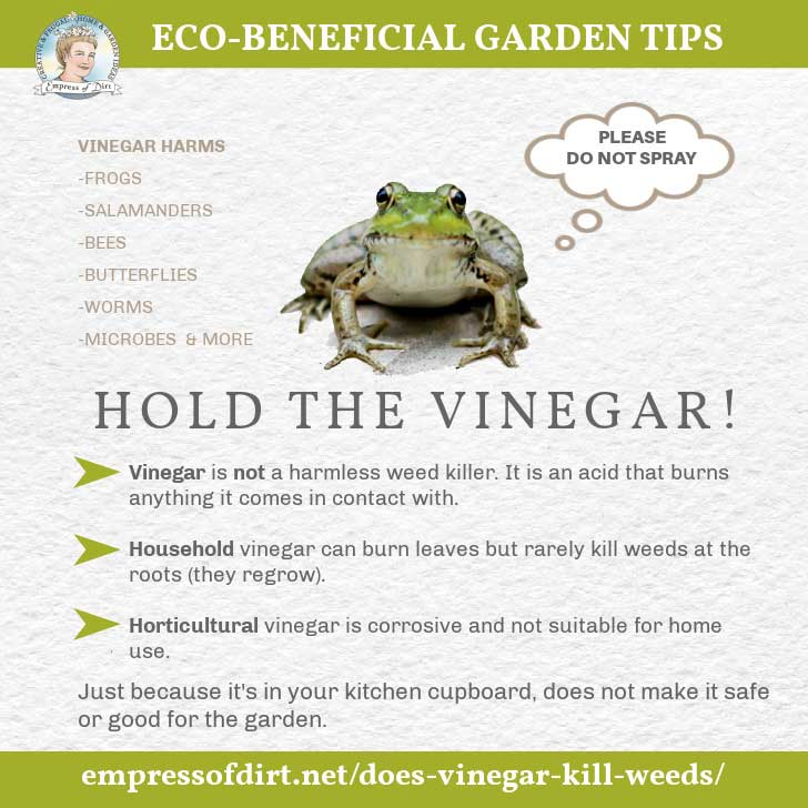 Graphic warning about vinegar burning wildlife like frogs in the garden.