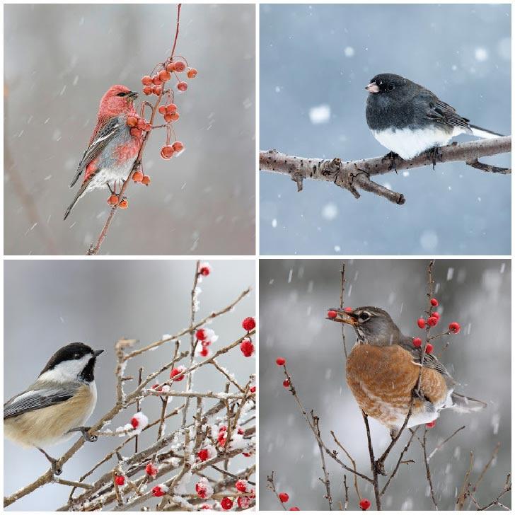 Wild birds in winter.