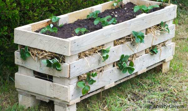 Strawberry planter made from wood pallet.