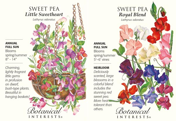Sweet pea seed packets.