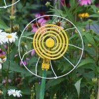 Daisy garden art flower.