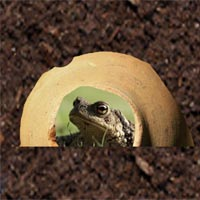 Toad house.