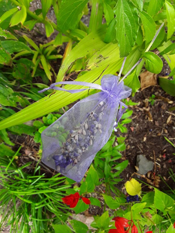 Use a tulle gift bag to catch seeds from a flower seed pod.
