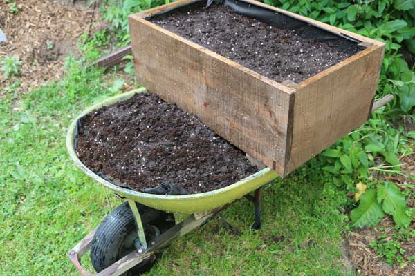 Old wheelbarrow filled with garden soil and planter box.