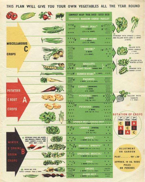 Year-round vegetable garden plan