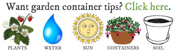 Want helpful garden container growing tips? Click here.