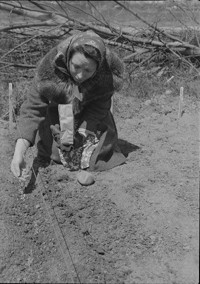 Woman planting seeds in garden.